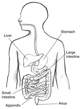 how to tell if you have appendix pain